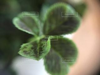 近くの植物のアップの写真・画像素材[1213879]