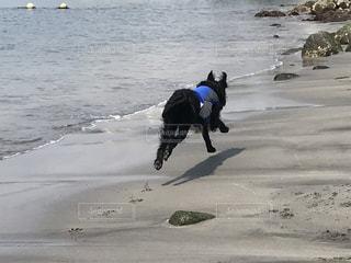 砂浜の上に乗って犬の写真・画像素材[1213919]