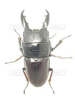 No.71849 昆虫