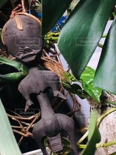 植物からぶら下がっているバナナの束の写真・画像素材[1064838]