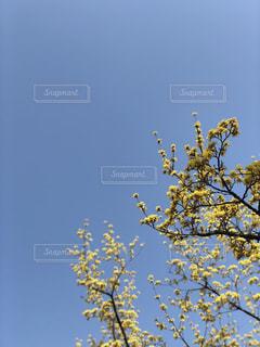 yellow+ blue.の写真・画像素材[1061695]