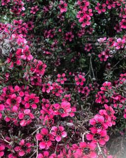 花の香りの写真・画像素材[2217400]