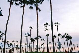 Sunset beach in California.の写真・画像素材[2789444]
