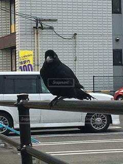 建物の前に立っている黒い鳥カラスの写真・画像素材[1064125]