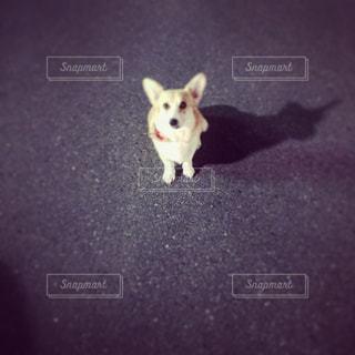 ポケモンゲット!の写真・画像素材[1061162]