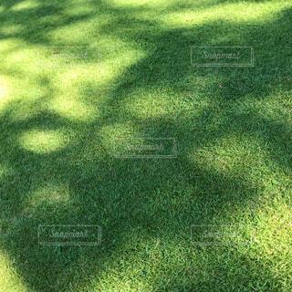 晴れた日の芝生と影の写真・画像素材[4046678]