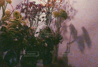 秋の夜の花束の写真・画像素材[4046727]