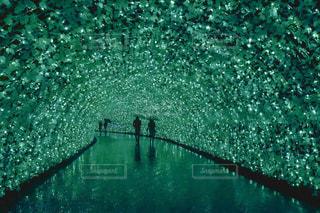 光の桜トンネルの写真・画像素材[1135407]