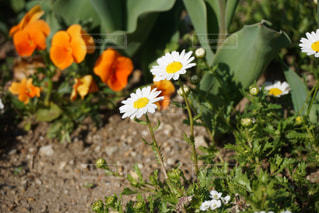 花の写真・画像素材[1102597]