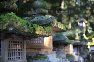 奈良公園の写真・画像素材[1061399]