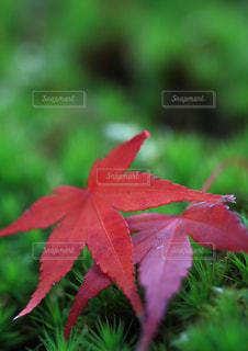 緑の葉と赤い花 - No.1067845
