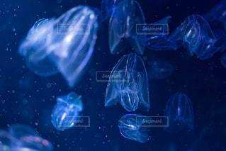 水族館の写真・画像素材[1236957]
