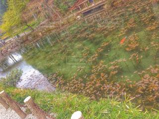 モネの池の写真・画像素材[1169349]