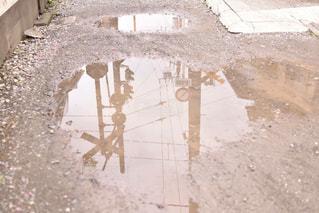 歩道の上を歩く猫の写真・画像素材[1074874]