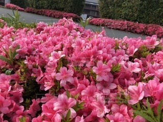 近くの植物にピンクの花のアップの写真・画像素材[1203247]