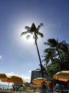 ヤシの木の横にあるビーチ パラソルに座っている人々 のグループの写真・画像素材[1061972]