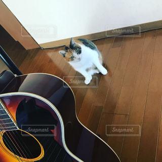 ギターと猫の写真・画像素材[1062072]