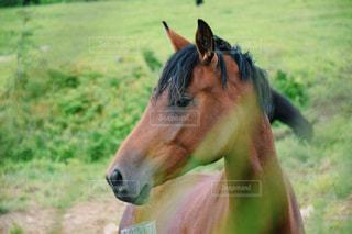 馬、たてがみをなびかせての写真・画像素材[1062848]
