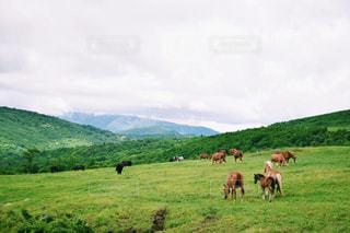 緑の草原に馬の群れの写真・画像素材[1062849]