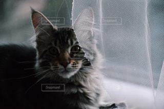 家猫 - No.1069844