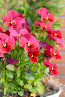 花の写真・画像素材[1063732]