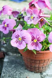 ピンクの花の写真・画像素材[1063807]