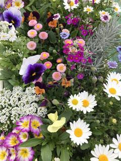 近くの花のアップの写真・画像素材[1065281]