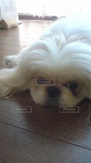 犬の写真・画像素材[35400]