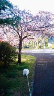 犬の写真・画像素材[68509]