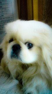 犬の写真・画像素材[68618]
