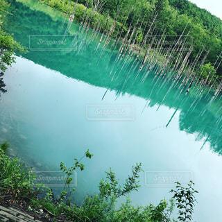 美瑛の青い池の写真・画像素材[1062423]