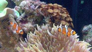 珊瑚と魚の写真・画像素材[1062533]