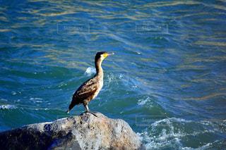川鳥の写真・画像素材[1072815]