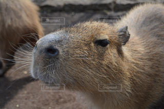 近くに動物のアップの写真・画像素材[1130679]