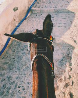 近くに馬のアップの写真・画像素材[1281280]