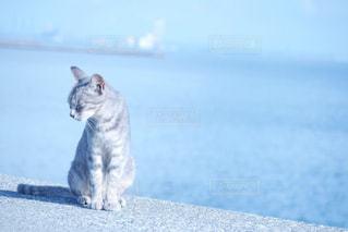 猫と海の写真・画像素材[1062956]