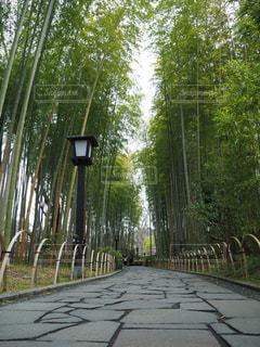 伊豆の竹林 - No.1073309
