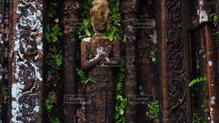 フォレスト内のツリーの写真・画像素材[1063441]