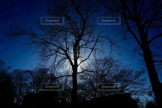 美しい樹々の写真・画像素材[1064004]