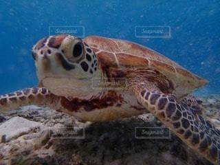 動物の写真・画像素材[36484]