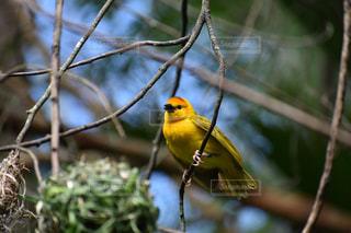 木の枝にとまる小鳥の写真・画像素材[1474109]