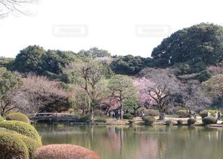 春の庭園の写真・画像素材[1063854]