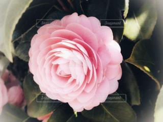 近くの花のアップ - No.1067320