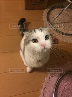 我が家のアイドル♡の写真・画像素材[1066624]