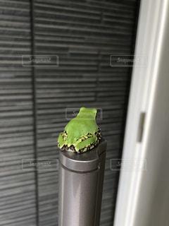 太ったカエルの写真・画像素材[1235651]