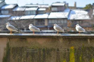 塀の上に座っている鳥の群れの写真・画像素材[3161949]