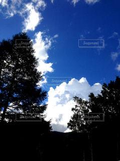 木々から望む入道雲の写真・画像素材[1067655]
