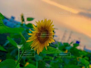 花のクローズアップの写真・画像素材[2436219]