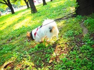 犬の写真・画像素材[37257]