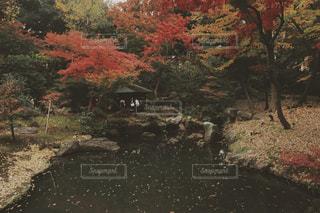 六義園の紅葉の写真・画像素材[1666326]
